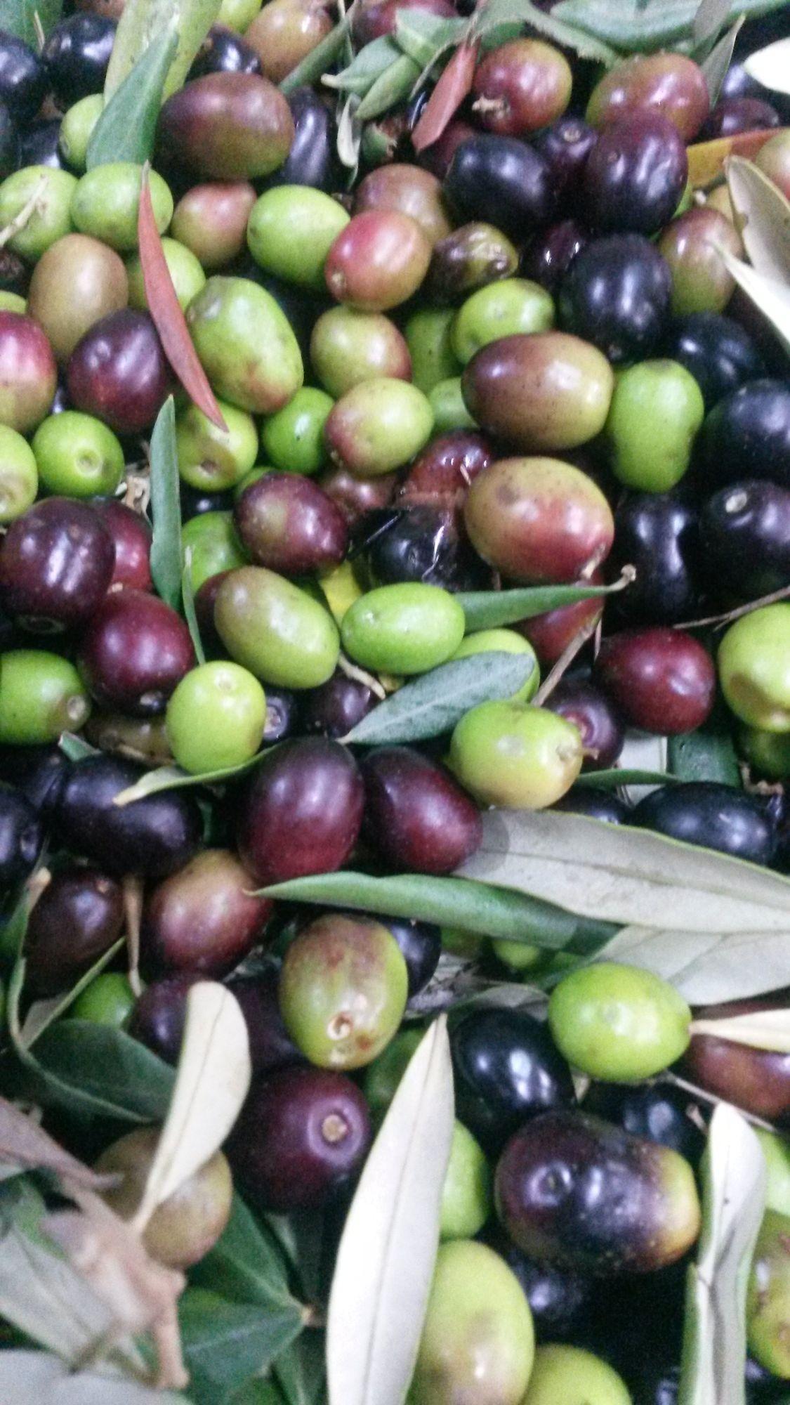 Olive irpine: Ravece